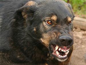 Что вы будете делать, если вашего ребенка будет грызть собака?