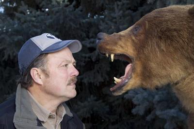 Ношение оружия не особенно поможет при встрече с медведем