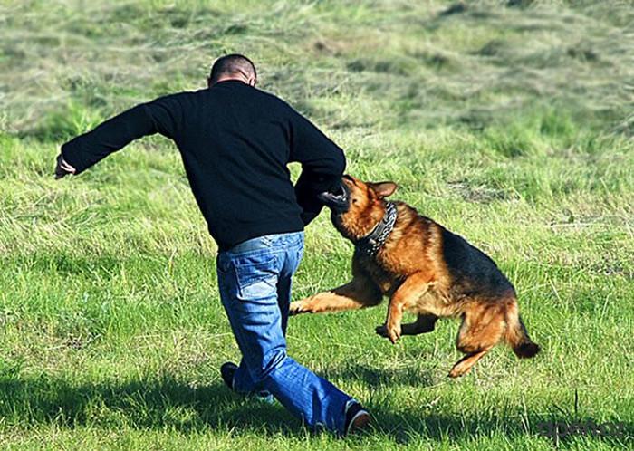 Картинки по запросу бросание камней в собаку