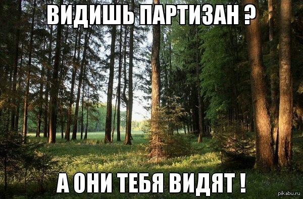 Лес ты видишь мы своими руками